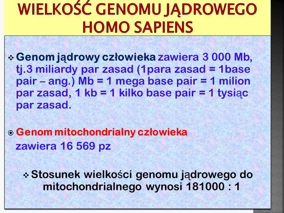  Cały genom ma wielkość: 3 000 Mb, w tym: 1.DNA kodujący (tj.