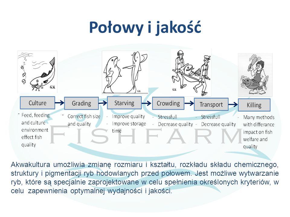 Połowy i jakość Akwakultura umożliwia zmianę rozmiaru i kształtu, rozkładu składu chemicznego, struktury i pigmentacji ryb hodowlanych przed połowem.