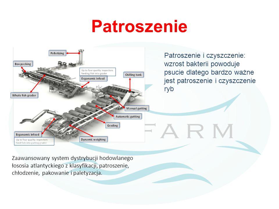 Patroszenie Zaawansowany system dystrybucji hodowlanego łososia atlantyckiego z klasyfikacji, patroszenie, chłodzenie, pakowanie i paletyzacja.