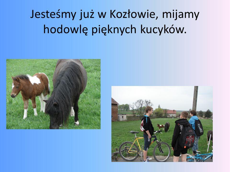 Jesteśmy już w Kozłowie, mijamy hodowlę pięknych kucyków.