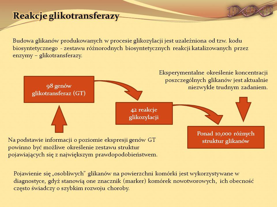 Budowa glikanów produkowanych w procesie glikozylacji jest uzależniona od tzw.
