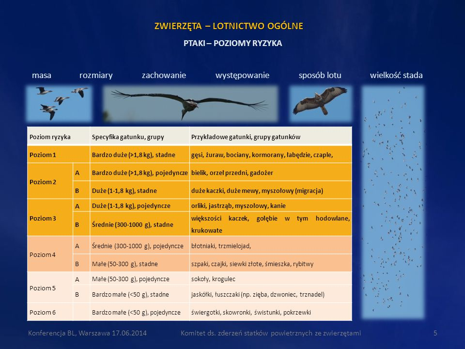 Komitet ds. zderzeń statków powietrznych ze zwierzętami5 masa rozmiary zachowanie występowanie sposób lotu wielkość stada PTAKI – POZIOMY RYZYKA Pozio