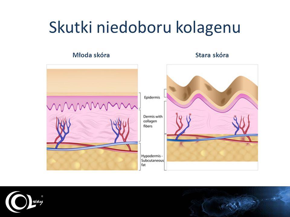 Kolagen ulega ciągłej wymianie najszybciej jest wymieniany w wątrobie najdłużej wymiana trwa w kościach W ciągu roku, w całym organiźmie wymieniane jest 3kg kolagenu