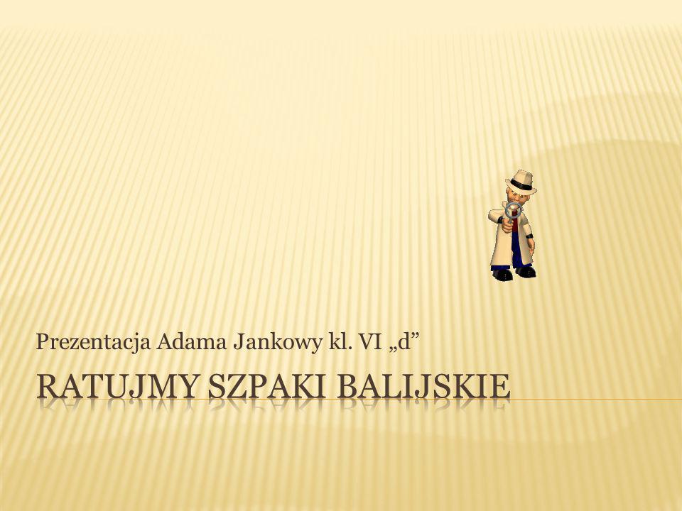 """Prezentacja Adama Jankowy kl. VI """"d"""""""