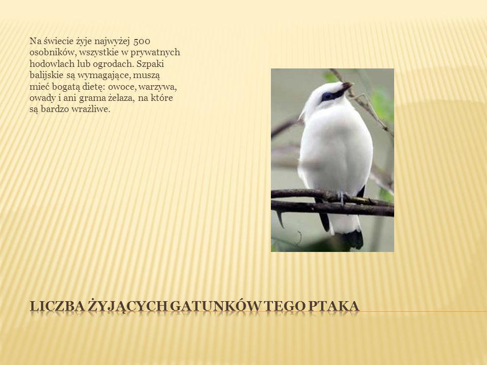 Na świecie żyje najwyżej 500 osobników, wszystkie w prywatnych hodowlach lub ogrodach.