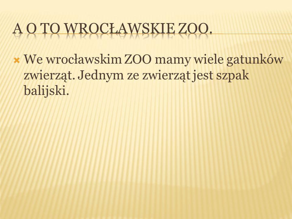  We wrocławskim ZOO mamy wiele gatunków zwierząt. Jednym ze zwierząt jest szpak balijski.