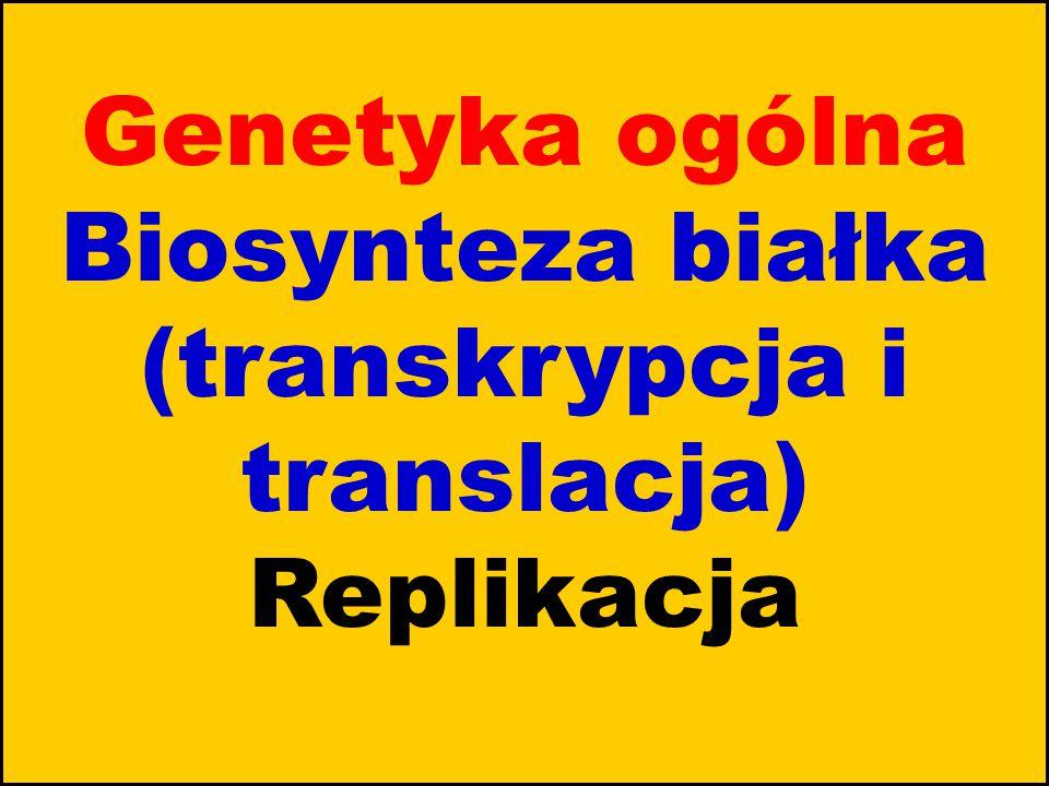 Genetyka ogólna Biosynteza białka (transkrypcja i translacja) Replikacja