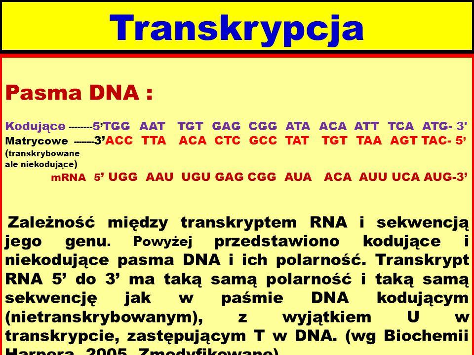 Transkrypcja Pasma DNA : Kodujące -------- 5 ' TGG AAT TGT GAG CGG ATA ACA ATT TCA ATG- 3 Matrycowe -------- 3'ACC TTA ACA CTC GCC TAT TGT TAA AGT TAC- 5 ' ( transkrybowane ale niekodujące ) mRNA 5 ' UGG AAU UGU GAG CGG AUA ACA AUU UCA AUG-3' Zależność między transkryptem RNA i sekwencją jego genu.