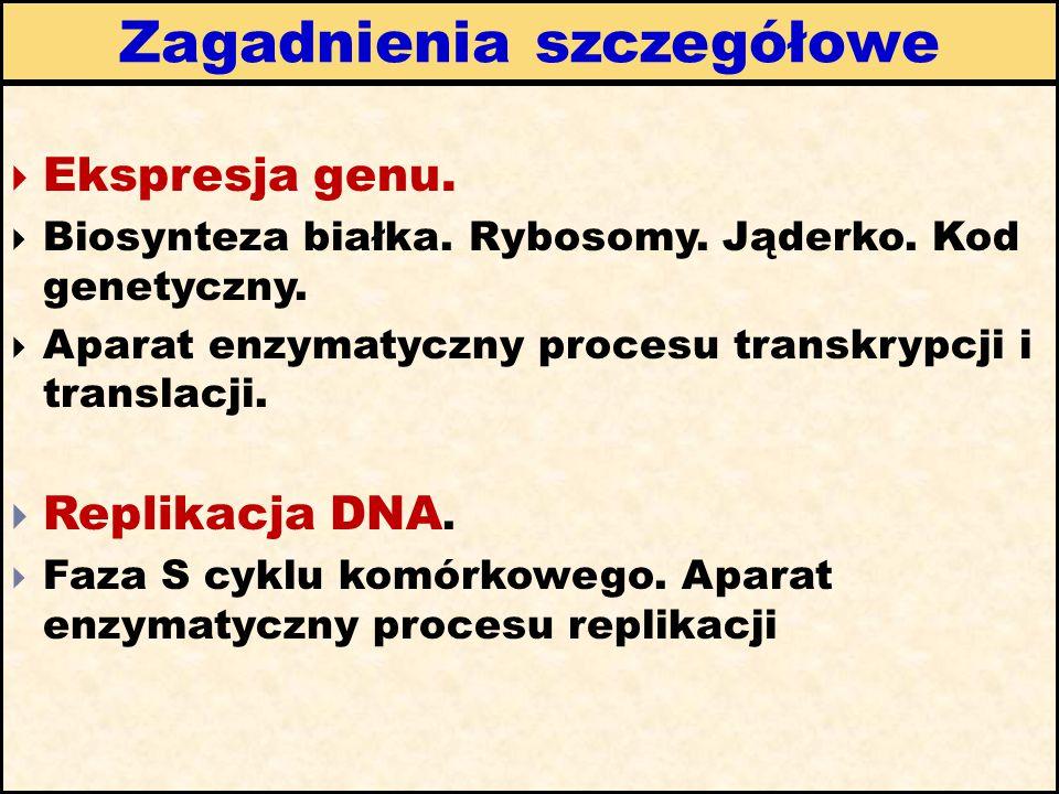 Zagadnienia szczegółowe  Ekspresja genu.  Biosynteza białka. Rybosomy. Jąderko. Kod genetyczny.  Aparat enzymatyczny procesu transkrypcji i transla