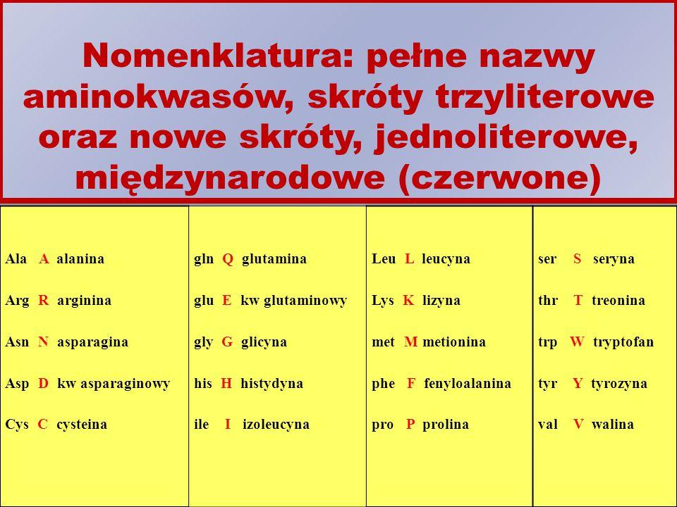 Nomenklatura: pełne nazwy aminokwasów, skróty trzyliterowe oraz nowe skróty, jednoliterowe, międzynarodowe (czerwone) Ala A alanina Arg R arginina Asn N asparagina Asp D kw asparaginowy Cys C cysteina gln Q glutamina glu E kw glutaminowy gly G glicyna his H histydyna ile I izoleucyna Leu L leucyna Lys K lizyna met M metionina phe F fenyloalanina pro P prolina ser S seryna thr T treonina trp W tryptofan tyr Y tyrozyna val V walina