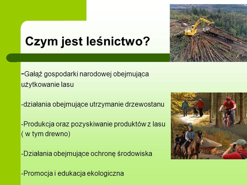 - Gałąź gospodarki narodowej obejmująca użytkowanie lasu -działania obejmujące utrzymanie drzewostanu -Produkcja oraz pozyskiwanie produktów z lasu (