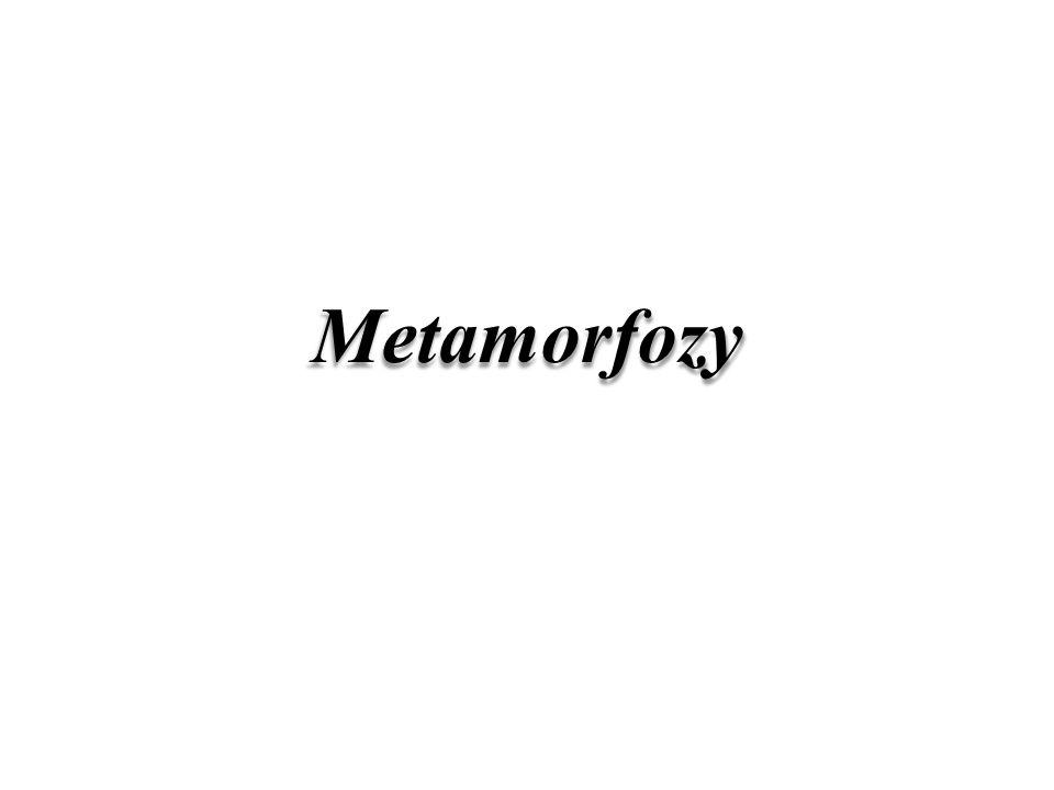 Metamorfozy (15) 18.00– 18.15