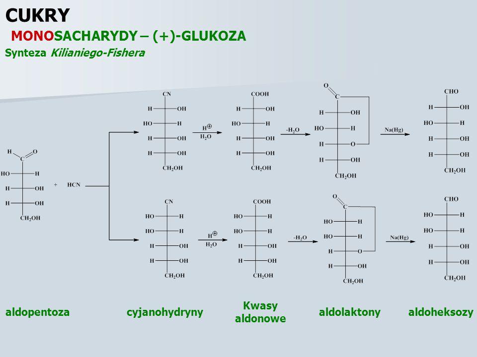 CUKRY MONOSACHARYDY – (+)-GLUKOZA Synteza Kilianiego-Fishera cyjanohydryny Kwasy aldonowe aldolaktonyaldoheksozyaldopentoza