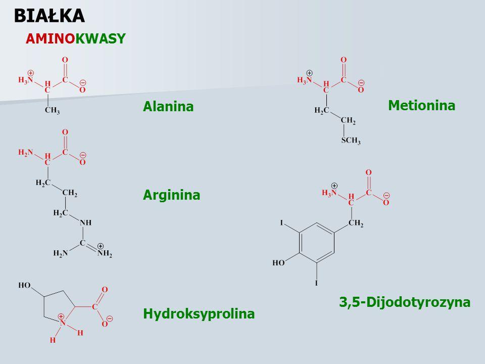 AMINOKWASY BIAŁKA Alanina Arginina Hydroksyprolina Metionina 3,5-Dijodotyrozyna