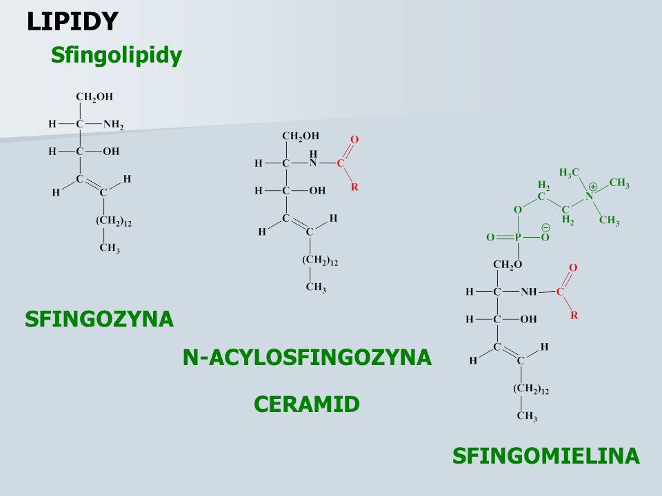 Glicerofosfolipidy LIPIDY 3-FOSFOGLICEROL KWAS LIZOFOSFATYDOWY KWAS FOSFATYDOWY R 1 – ZAZWYCZAJ NASYCONA R 2 – ZAZWYCZAJ NIENASYCONA