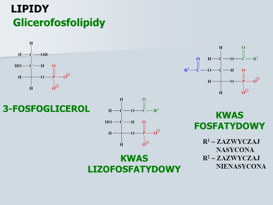 LIPIDY Lipidy błonowe Fragment polarny hydrofilowy CZĄSTECZKA AMFOFILOWA Fragment niepolarny hydrofobowy