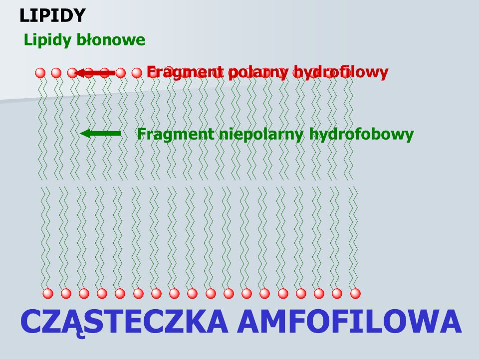 LIPIDY Glicerydy GLICEROL GLICERYNA TRIACYLOWY ESTER GLICEROLU TŁUSZCZ