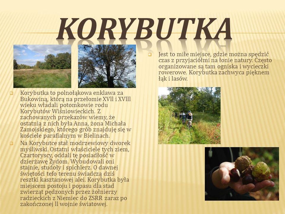  Korybutka to polnołąkowa enklawa za Bukowiną, którą na przełomie XVll i XVlll wieku władali potomkowie rodu Korybutów Wiśniowieckich.