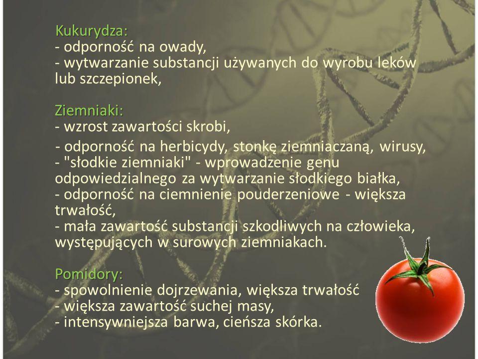 Kukurydza: Ziemniaki: Kukurydza: - odporność na owady, - wytwarzanie substancji używanych do wyrobu leków lub szczepionek, Ziemniaki: - wzrost zawartości skrobi, Pomidory: - odporność na herbicydy, stonkę ziemniaczaną, wirusy, - słodkie ziemniaki - wprowadzenie genu odpowiedzialnego za wytwarzanie słodkiego białka, - odporność na ciemnienie pouderzeniowe - większa trwałość, - mała zawartość substancji szkodliwych na człowieka, występujących w surowych ziemniakach.