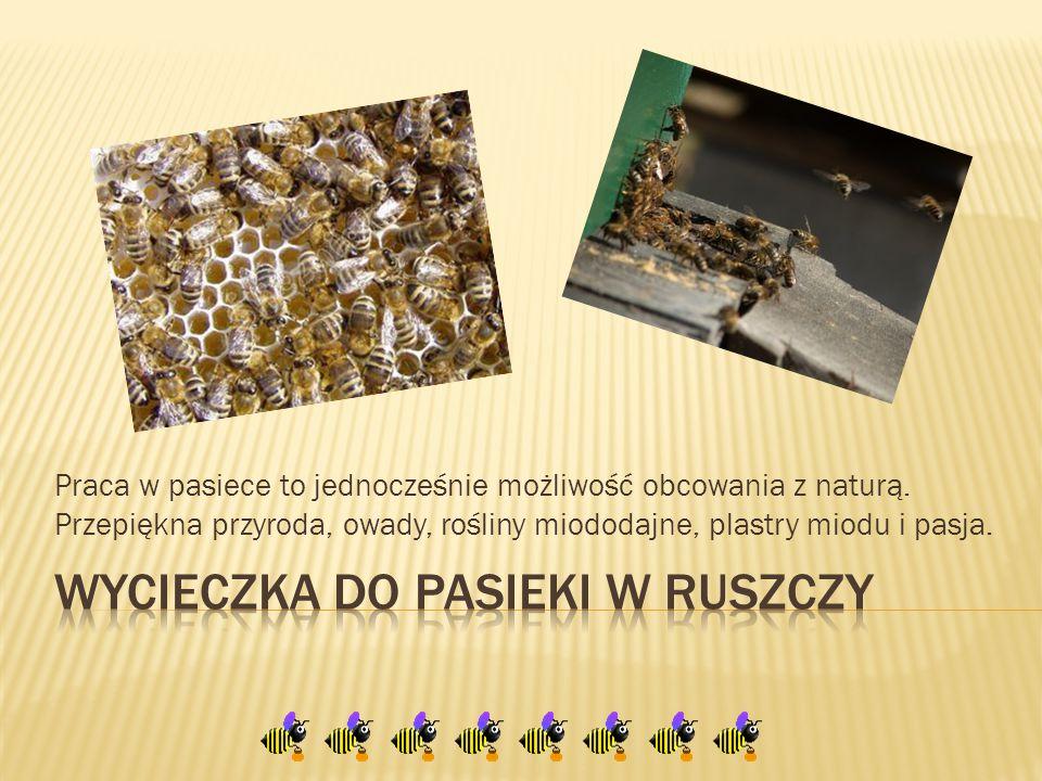 Praca w pasiece to jednocześnie możliwość obcowania z naturą. Przepiękna przyroda, owady, rośliny miododajne, plastry miodu i pasja.