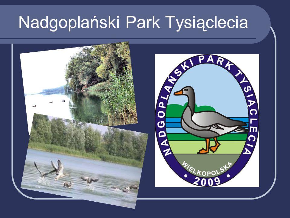 Nadgoplański Park Tysiąclecia