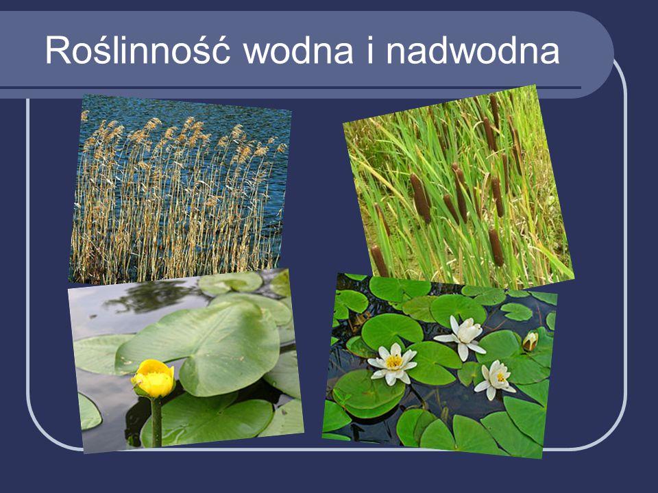 Roślinność wodna i nadwodna