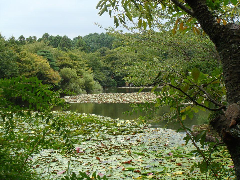 Japonia – przyroda