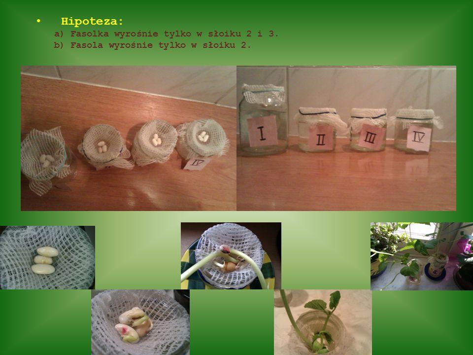 Hipoteza: a) Fasolka wyrośnie tylko w słoiku 2 i 3. b) Fasola wyrośnie tylko w słoiku 2.