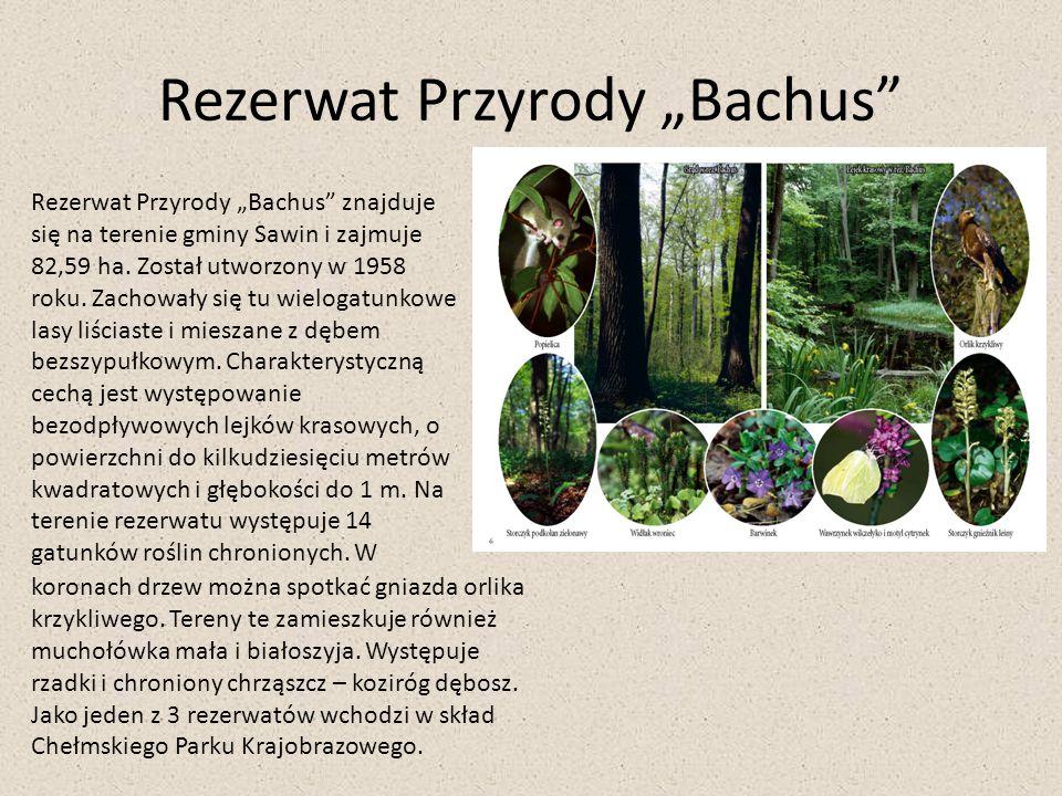 """Rezerwat Przyrody """"Bachus"""" Rezerwat Przyrody """"Bachus"""" znajduje się na terenie gminy Sawin i zajmuje 82,59 ha. Został utworzony w 1958 roku. Zachowały"""