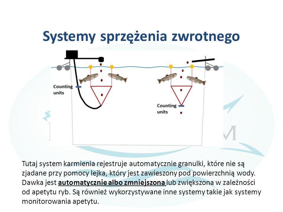 Systemy sprzężenia zwrotnego Tutaj system karmienia rejestruje automatycznie granulki, które nie są zjadane przy pomocy lejka, który jest zawieszony pod powierzchnią wody.