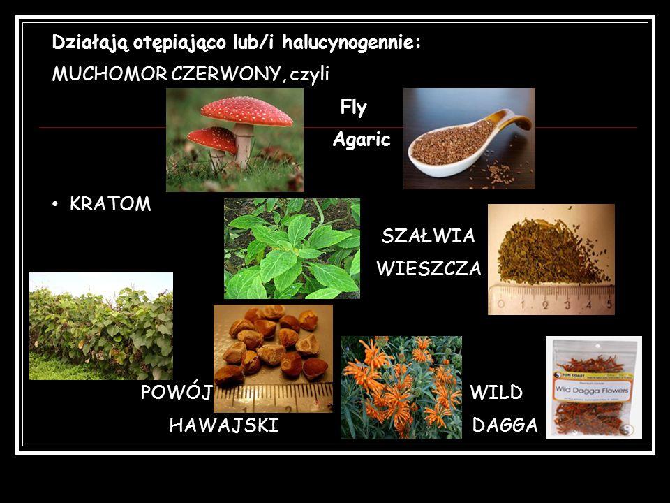 Działają otępiająco lub/i halucynogennie: MUCHOMOR CZERWONY, czyli Fly Agaric KRATOM SZAŁWIA WIESZCZA POWÓJ WILD HAWAJSKI DAGGA