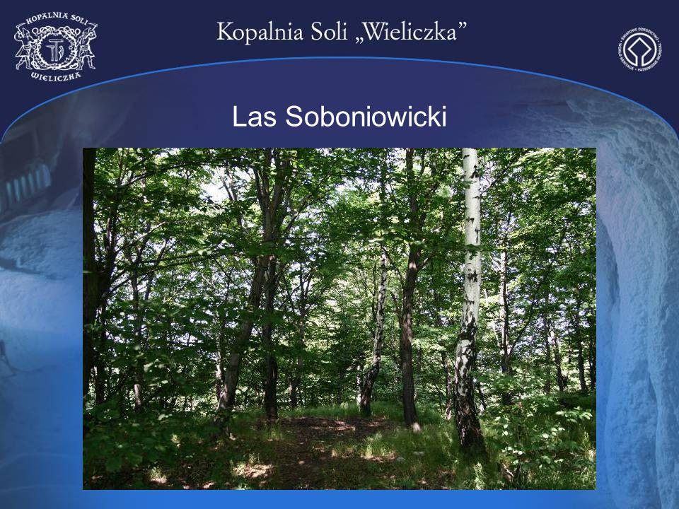 Las Soboniowicki