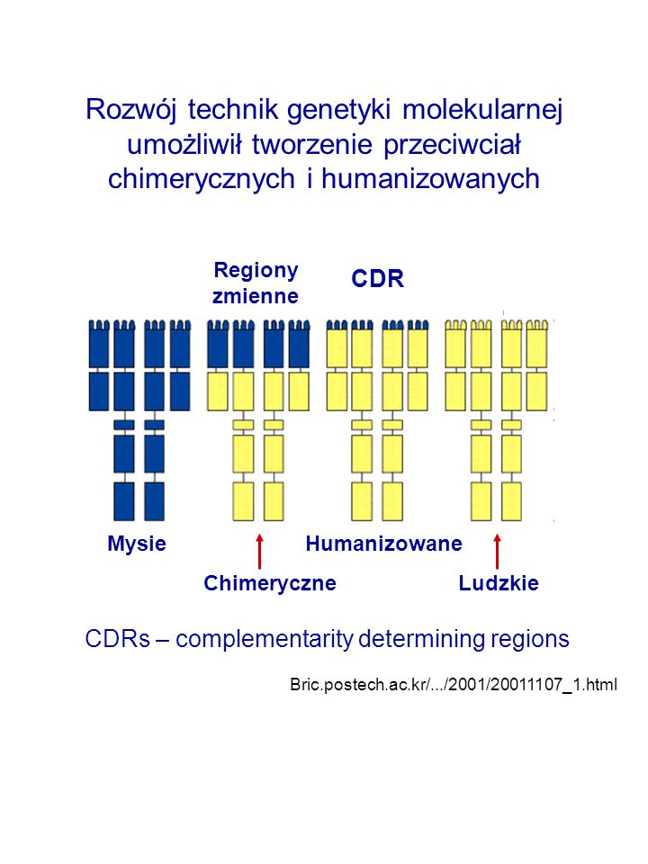 Rozwój technik genetyki molekularnej umożliwił tworzenie przeciwciał chimerycznych i humanizowanych CDRs – complementarity determining regions Bric.postech.ac.kr/.../2001/20011107_1.html Mysie Humanizowane Chimeryczne Ludzkie Regiony zmienne CDR
