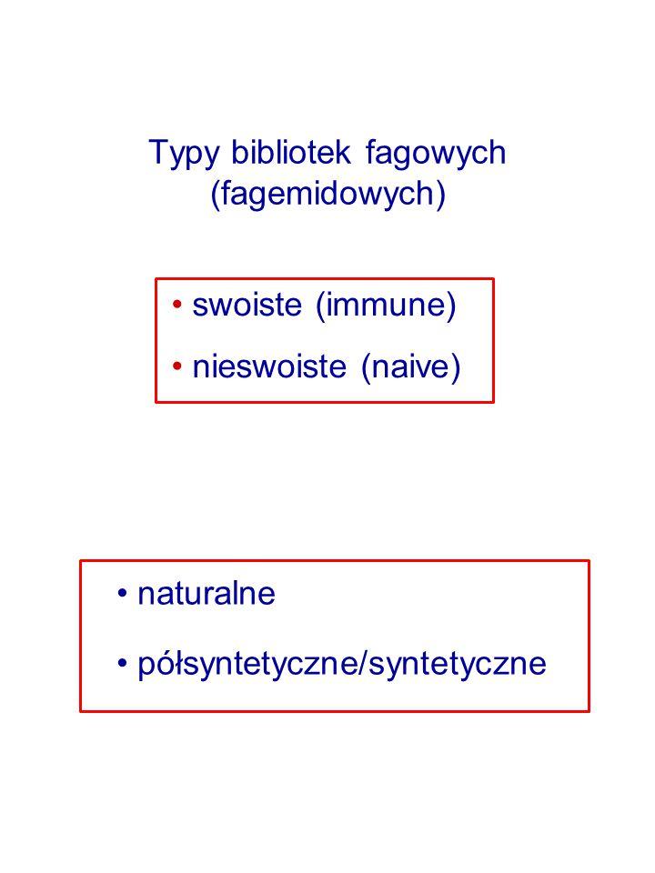 Typy bibliotek fagowych (fagemidowych) swoiste (immune) nieswoiste (naive) naturalne półsyntetyczne/syntetyczne