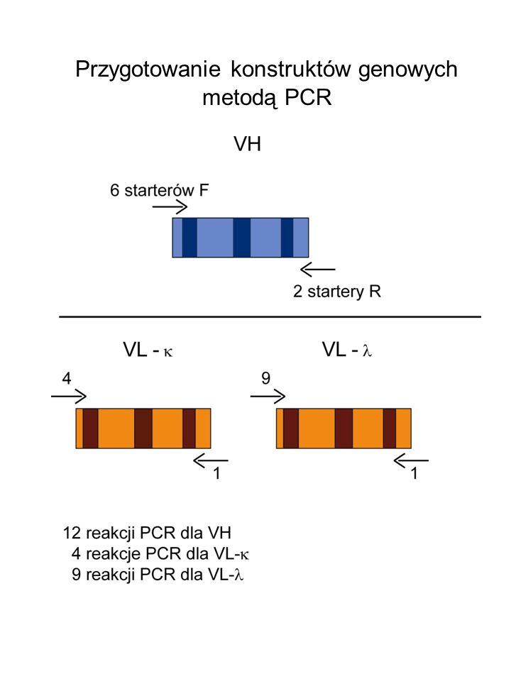 Przygotowanie konstruktów genowych metodą PCR
