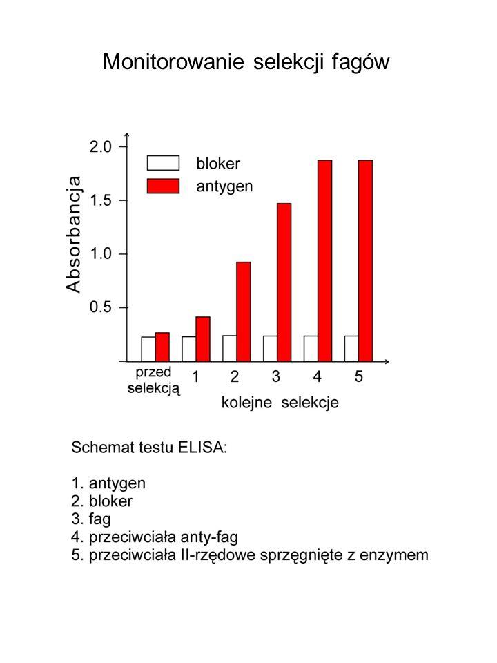 Monitorowanie selekcji fagów