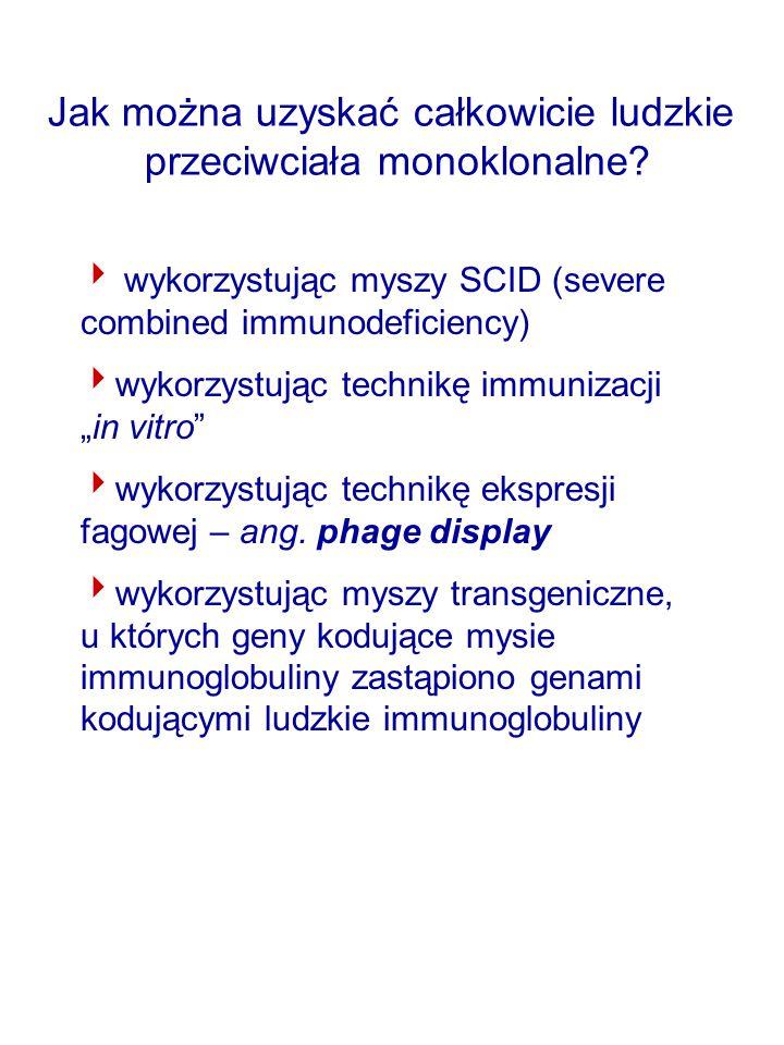 Próby uzyskiwania ludzkich przeciwciał monoklonalnych przy wykorzystaniu myszy SCID SCID – severe combined immunodeficiency ciężki, złożony niedobór immunologiczny SCID hu-hematochimeric mice Są to myszy, u których częściowo rekonstruuje się układ odpornościowy człowieka – transplantacja tkanek płodowych: fragmentów kości, grasicy, węzłów chłonnych.