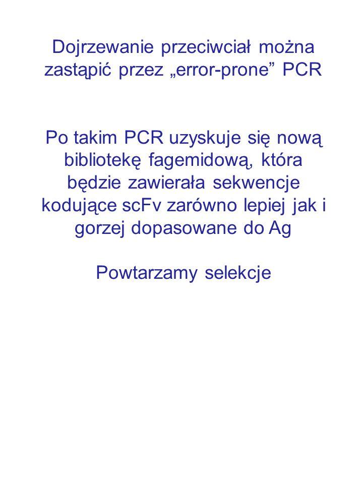 """Dojrzewanie przeciwciał można zastąpić przez """"error-prone"""" PCR Po takim PCR uzyskuje się nową bibliotekę fagemidową, która będzie zawierała sekwencje"""