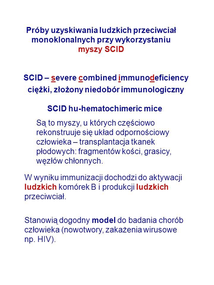 Próby uzyskiwania ludzkich przeciwciał monoklonalnych przy wykorzystaniu myszy SCID SCID – severe combined immunodeficiency ciężki, złożony niedobór i