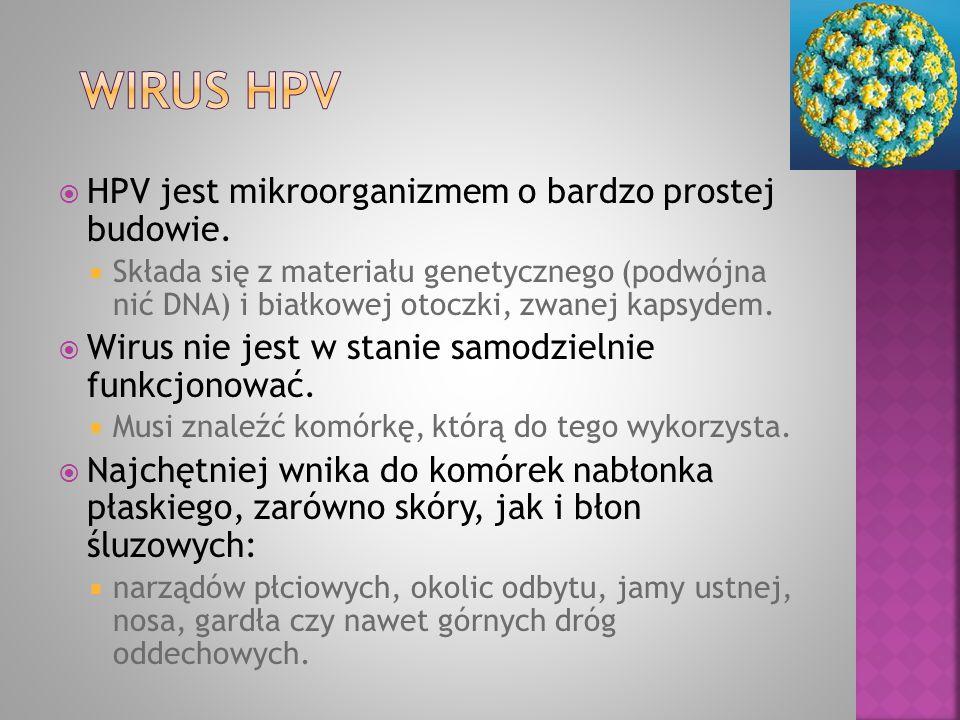  HPV jest mikroorganizmem o bardzo prostej budowie.  Składa się z materiału genetycznego (podwójna nić DNA) i białkowej otoczki, zwanej kapsydem. 