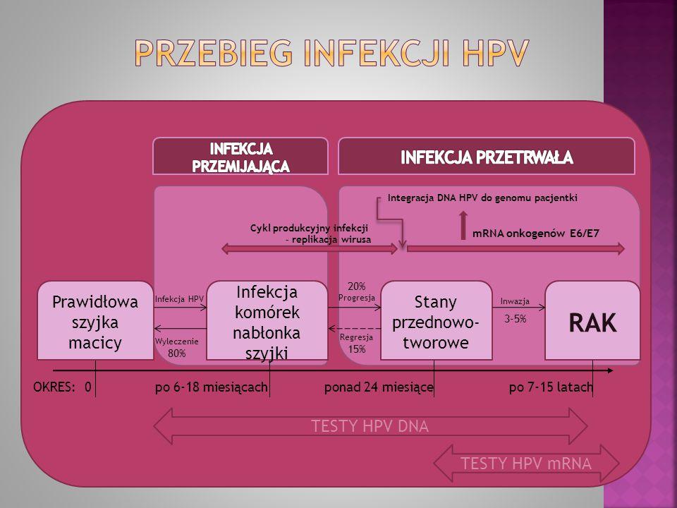Infekcja komórek nabłonka szyjki Prawidłowa szyjka macicy Stany przednowo- tworowe RAK TESTY HPV DNA TESTY HPV mRNA OKRES:0 po 6-18 miesiącach Infekcj