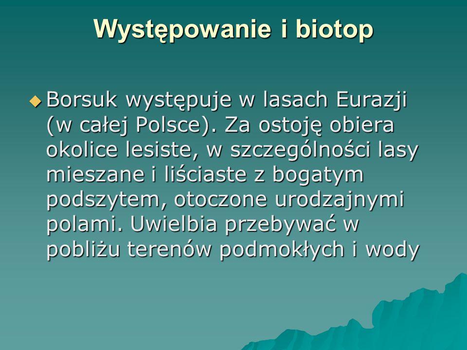 Występowanie i biotop  Borsuk występuje w lasach Eurazji (w całej Polsce). Za ostoję obiera okolice lesiste, w szczególności lasy mieszane i liściast