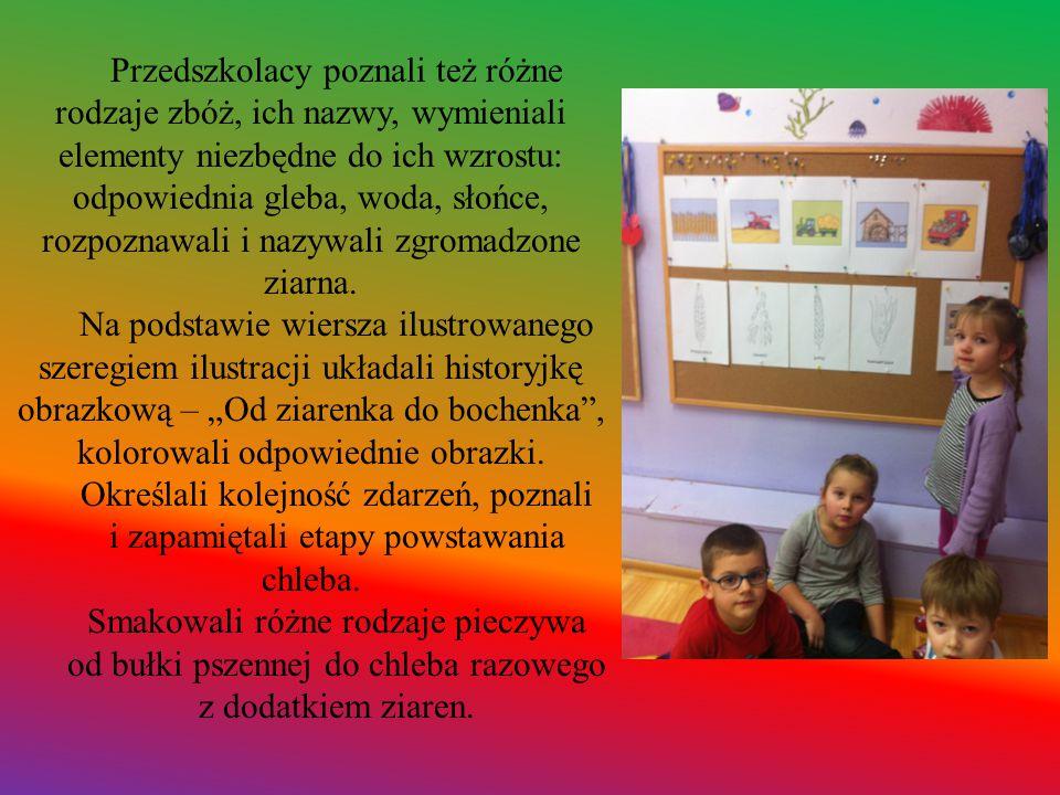 Przedszkolacy poznali też różne rodzaje zbóż, ich nazwy, wymieniali elementy niezbędne do ich wzrostu: odpowiednia gleba, woda, słońce, rozpoznawali i nazywali zgromadzone ziarna.