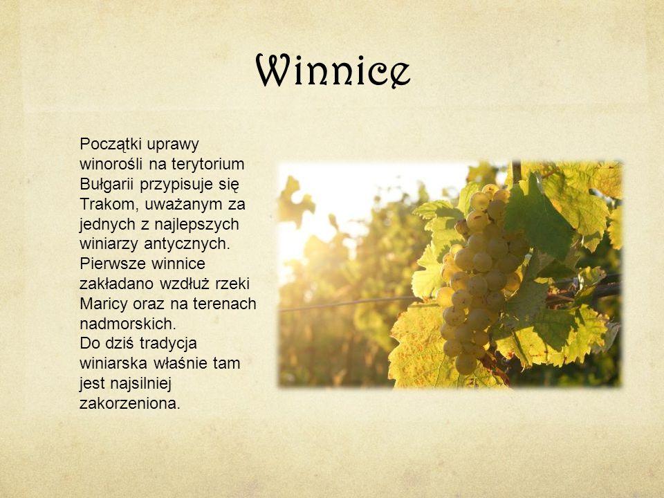 Winnice Początki uprawy winorośli na terytorium Bułgarii przypisuje się Trakom, uważanym za jednych z najlepszych winiarzy antycznych. Pierwsze winnic