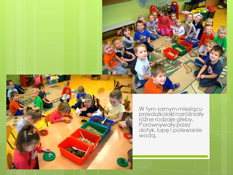 W tym samym miesiącu przedszkolaki rozróżniały różne rodzaje gleby. Porównywały przez dotyk, lupę i polewanie wodą.