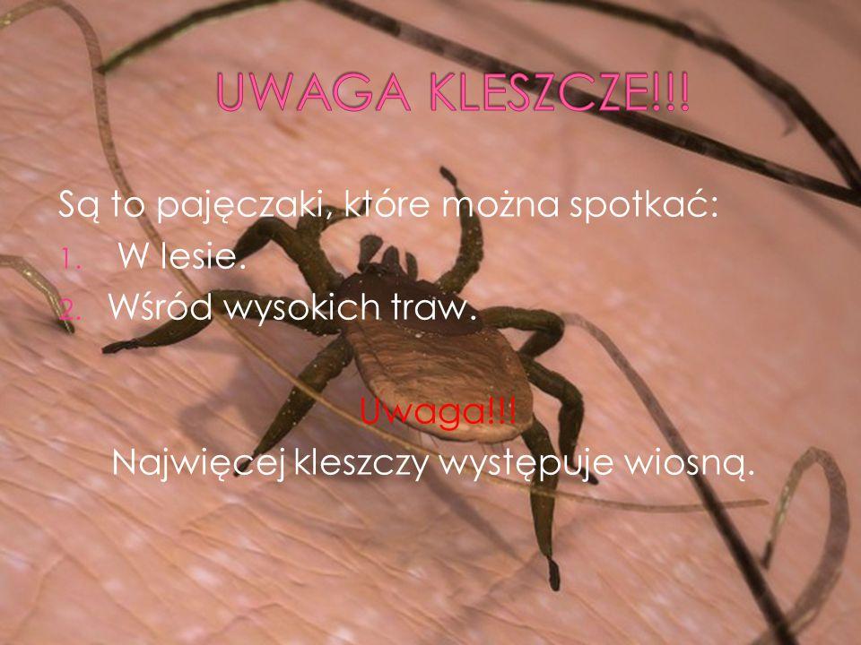 Są to pajęczaki, które można spotkać: 1. W lesie.