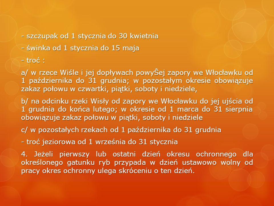- szczupak od 1 stycznia do 30 kwietnia - świnka od 1 stycznia do 15 maja - troć : a/ w rzece Wiśle i jej dopływach powyŜej zapory we Włocławku od 1 p