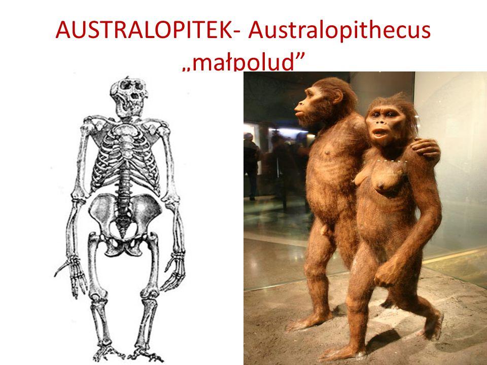 "AUSTRALOPITEK- Australopithecus ""małpolud"