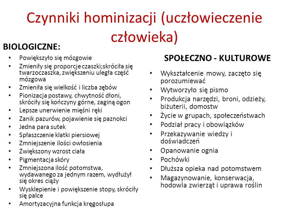 Czynniki hominizacji (uczłowieczenie człowieka) BIOLOGICZNE: Powiększyło się mózgowie Zmieniły się proporcje czaszki;skróciła się twarzoczaszka, zwiększeniu uległa część mózgowa Zmieniła się wielkość i liczba zębów Pionizacja postawy, chwytność dłoni, skróciły się kończyny górne, zaginą ogon Lepsze unerwienie mięśni ręki Zanik pazurów, pojawienie się paznokci Jedna para sutek Spłaszczenie klatki piersiowej Zmniejszenie ilości owłosienia Zwiększony wzrost ciała Pigmentacja skóry Zmniejszona ilość potomstwa, wydawanego za jednym razem, wydłużył się okres ciąży Wysklepienie i powiększenie stopy, skróciły się palce Amortyzacyjna funkcja kręgosłupa SPOŁECZNO - KULTUROWE Wykształcenie mowy, zaczęto się porozumiewać Wytworzyło się pismo Produkcja narzędzi, broni, odzieży, biżuterii, domostw Życie w grupach, społeczeństwach Podział pracy i obowiązków Przekazywanie wiedzy i doświadczeń Opanowanie ognia Pochówki Dłuższa opieka nad potomstwem Magazynowanie, konserwacja, hodowla zwierząt i uprawa roślin