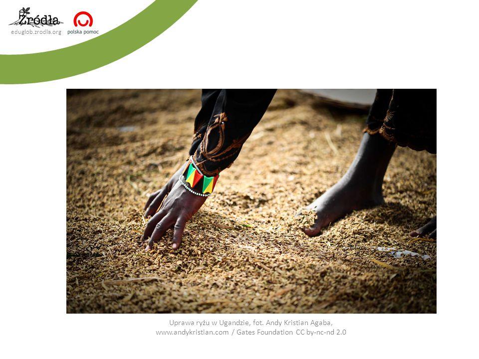 eduglob.zrodla.org Uprawa ryżu w Ugandzie, fot. Andy Kristian Agaba, www.andykristian.com / Gates Foundation CC by-nc-nd 2.0